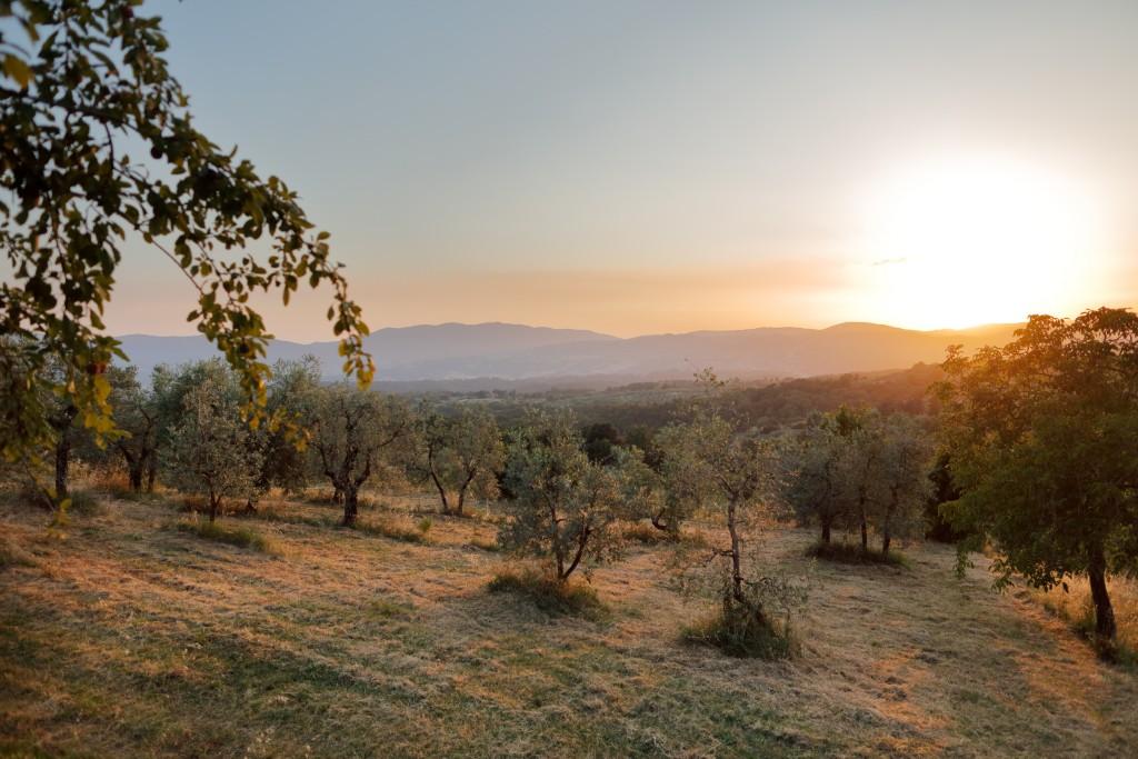 Tuscan Panorama - Holidays in Tuscany